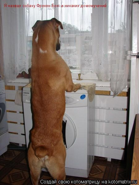 Котоматрица: Я назвал собаку Фрекен Бок- и никаких домомучений