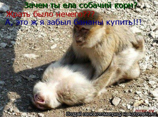 Котоматрица: Зачем ты ела собачий корм?  Жрать было нечего??? А, это ж я забыл бананы купить!!!