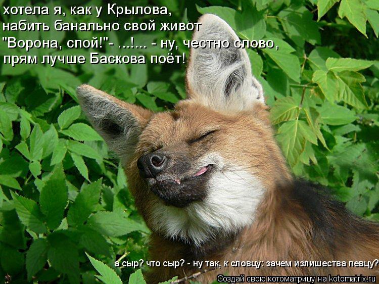 """Котоматрица: хотела я, как у Крылова, набить банально свой живот """"Ворона, спой!""""- ...!... - ну, честно слово, прям лучше Баскова поёт! а сыр? что сыр? - ну так, к"""