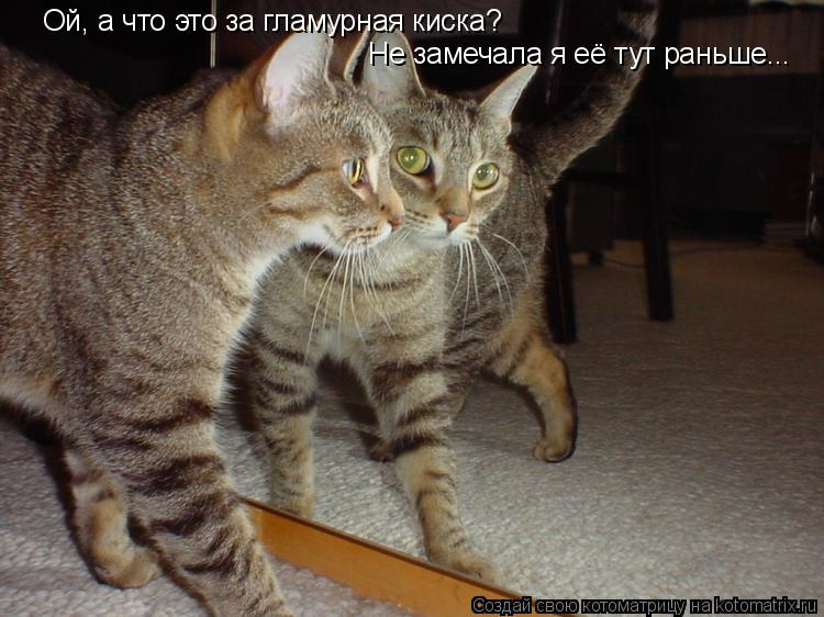 Котоматрица: Ой, а что это за гламурная киска? Не замечала я её тут раньше...