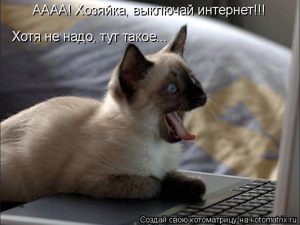 Котоматрица: АААА! Хозяйка, выключай интернет!!! Хотя не надо, тут такое...