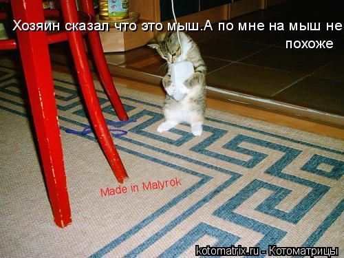 Котоматрица: Хозяин сказал что это мыш.А по мне на мыш не похоже. Хозяин сказал что это мыш.А по мне на мыш не похоже Made in Malyrok