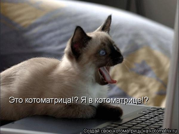 Котоматрица: Это котоматрица!? Я в котоматрице!?  Это котоматрица!? Я в котоматрице!?
