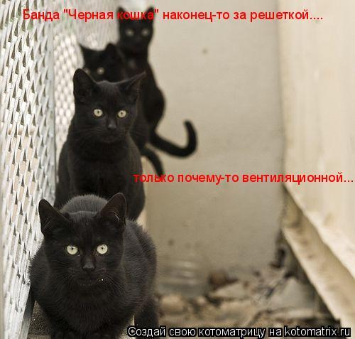 """Котоматрица: Банда """"Черная кошка"""" наконец-то за решеткой.... только почему-то вентиляционной..."""