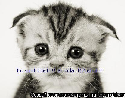 Котоматрица: Eu sunt Cristi!!! ai mila :P,Pushok!!