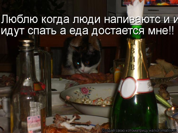 Котоматрица: Люблю когда люди напиваютс и идут идут спать а еда достается мне!!