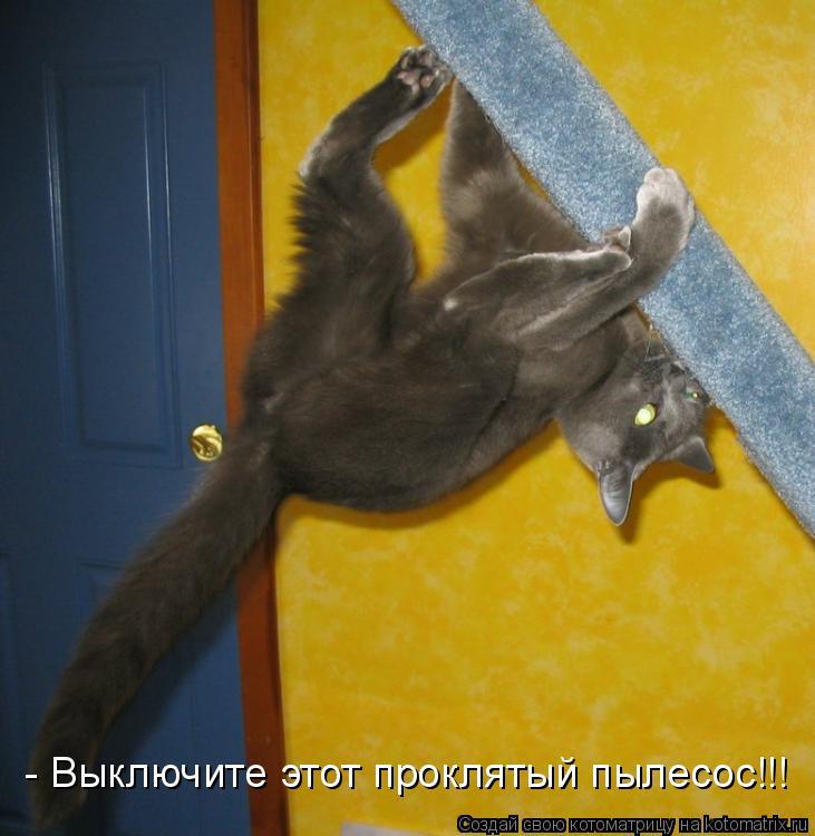 Котоматрица: - Выключите этот проклятый пылесос!!!