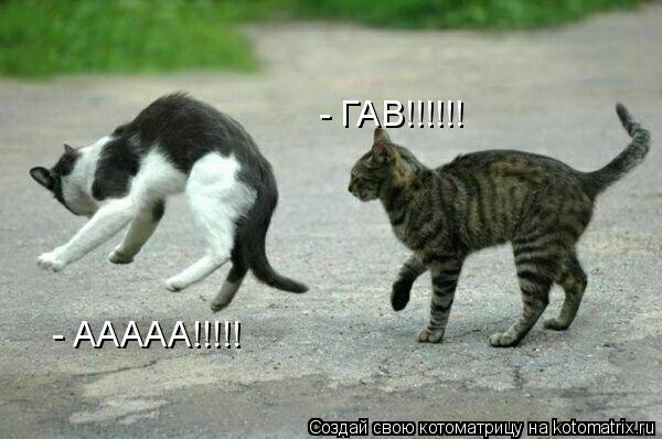 Котоматрица: - ГАВ!!!!!! - ААААА!!!!!