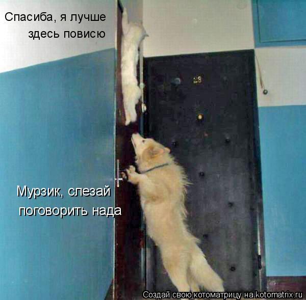 Котоматрица: Мурзик, слезай поговорить нада Спасиба, я лучше  здесь повисю