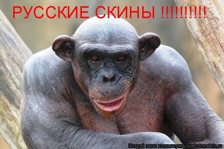 Котоматрица: РУССКИЕ СКИНЫ !!!!!!!!!!