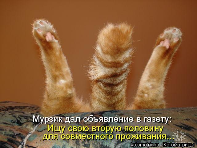 Котоматрица: Мурзик дал объявление в газету: Ищу свою вторую половину  для совместного проживания...