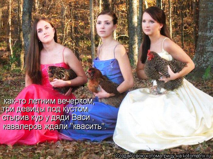 """Котоматрица: как-то летним вечерком, три девицы под кустом  стырив кур у дяди Васи , кавалеров ждали """"квасить""""."""