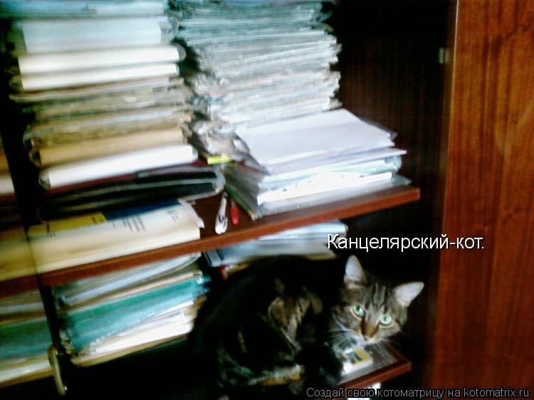Котоматрица: Канцелярский-кот.