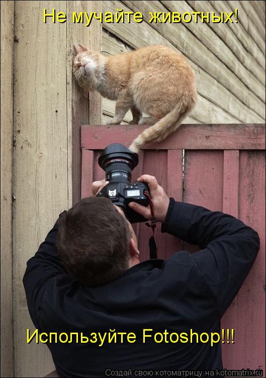 Котоматрица: Не мучайте животных! Используйте Fotoshop!!!