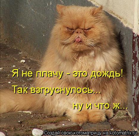 Котоматрица: Я не плачу - это дождь! Так взгруснулось... ну и что ж...