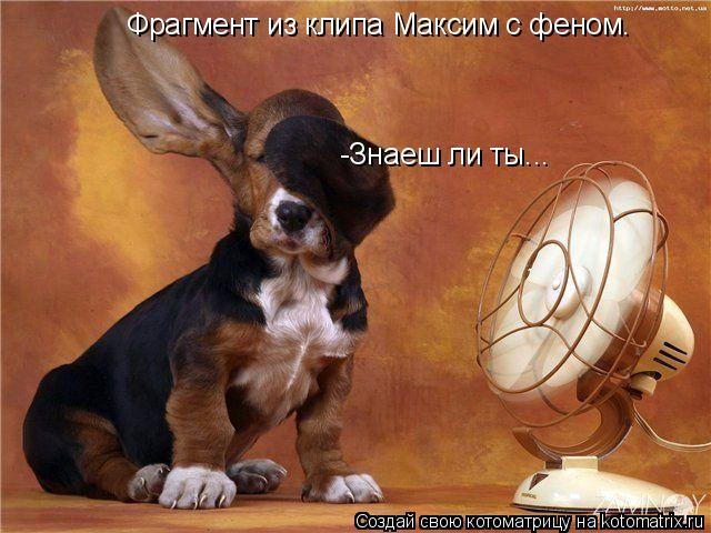 Котоматрица: Фрагмент из клипа Максим с феном. -Знаеш ли ты...