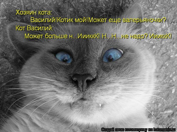 Котоматрица: Хозяин кота: Василий!Котик мой!Может еще валерьяночки? Кот Василий: Может больше н...ИииккК! Н...Н...не надо? ИииккК!