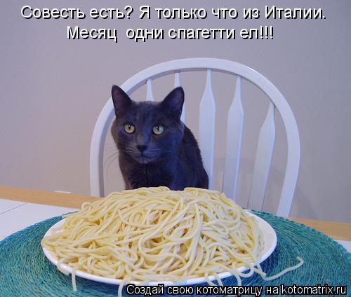 Котоматрица: Совесть есть? Я только что из Италии.  Месяц  одни спагетти ел!!!