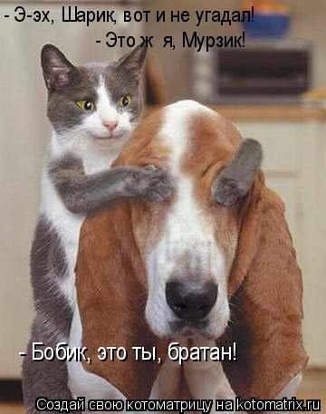 Котоматрица: - Бобик, это ты, братан! - Э-эх, Шарик, вот и не угадал! - Это ж  я, Мурзик!