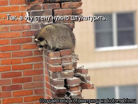 Котоматрица: - Так, а эту стену нужно штукатурить.