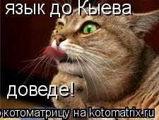 Котоматрица: язык до Кыева доведе!