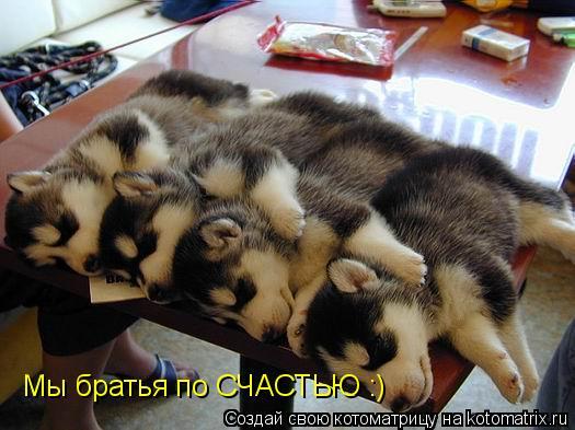 Котоматрица: Мы братья по СЧАСТЬЮ :)