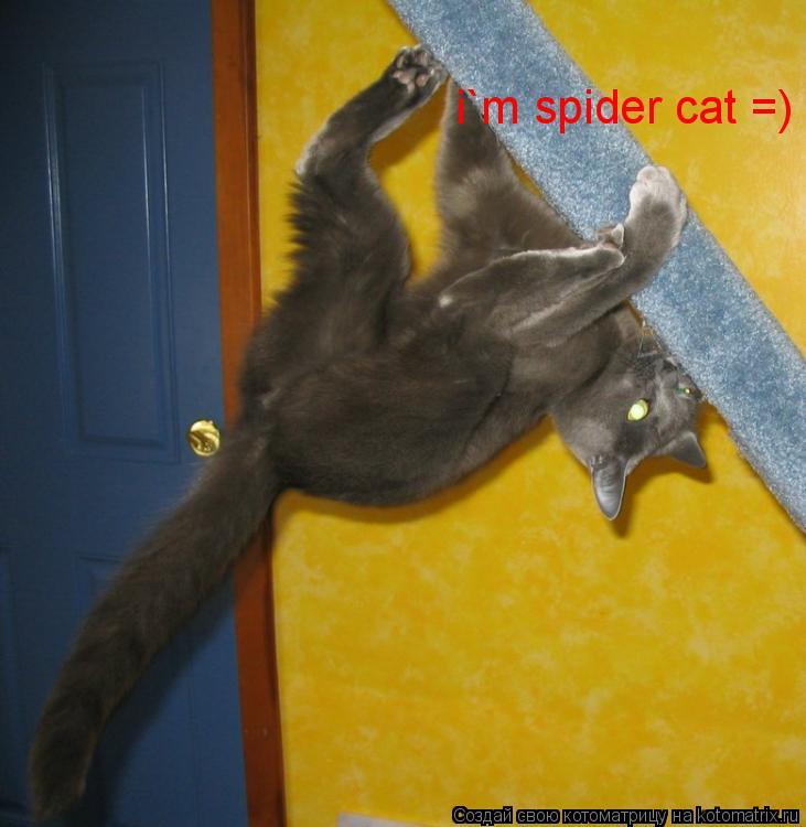 Котоматрица: i`m spider cat =)