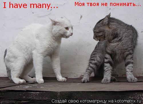 Котоматрица: I have many... Моя твоя не понимать...