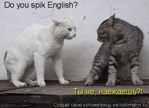 Котоматрица: Do you spik English?  Ты че, наежаешь?!