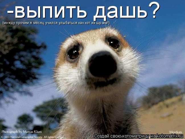 Котоматрица: -выпить дашь? (между прочим я месяц учился улыбаться как кот из шрэка!)