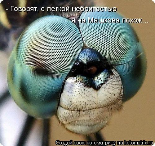 Котоматрица: - Говорят, с легкой небритостью  я на Машкова похож...