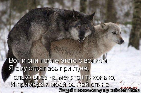 Котоматрица: Вот и спи после этого с волком, Я ему отдалась при луне, Только влез на меня он тихонько, И примерз к моей рыжей спине...