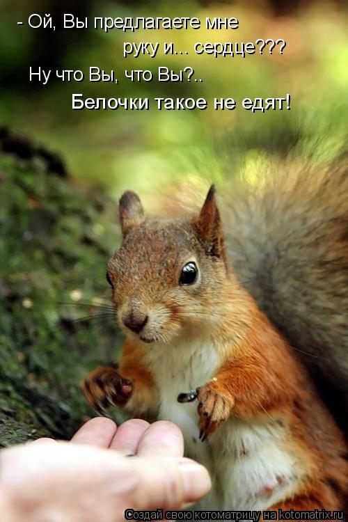 Котоматрица: - Ой, Вы предлагаете мне  руку и... сердце??? Ну что Вы, что Вы?.. Белочки такое не едят!