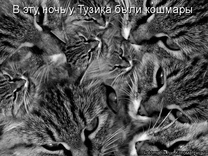 Котоматрица: В эту ночь у Тузика были кошмары
