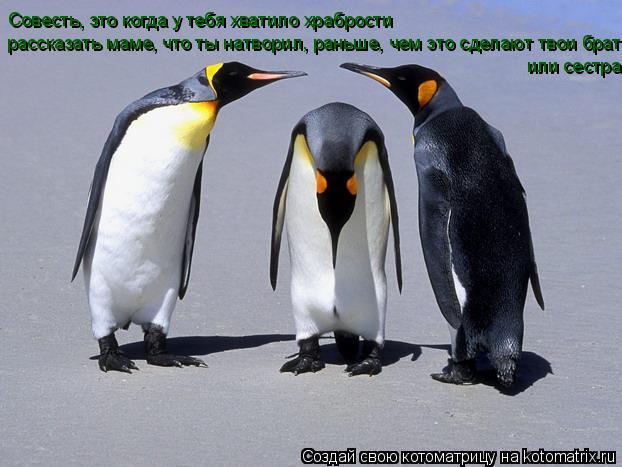 Котоматрица: Совесть, это когда у тебя хватило храбрости рассказать маме, что ты натворил, раньше, чем это сделают твои брат или сестра или сестра