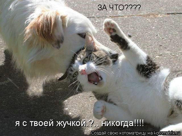 Котоматрица: ЗА ЧТО???? я с твоей жучкой.?.. никогда!!!!