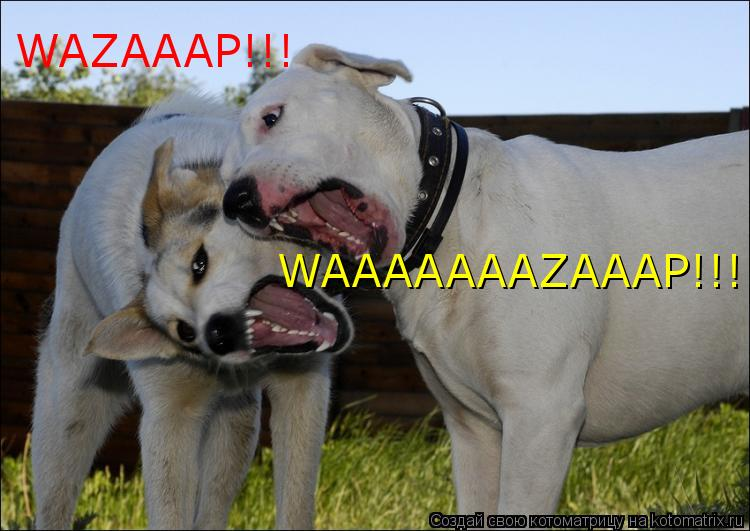 Котоматрица: WAZAAAP!!! WAAAAAAAZAAAP!!!