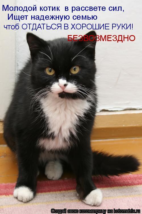 Котоматрица: Ищет надежную семью  чтоб ОТДАТЬСЯ В ХОРОШИЕ РУКИ! Молодой котик  в рассвете сил, БЕЗВОЗМЕЗДНО