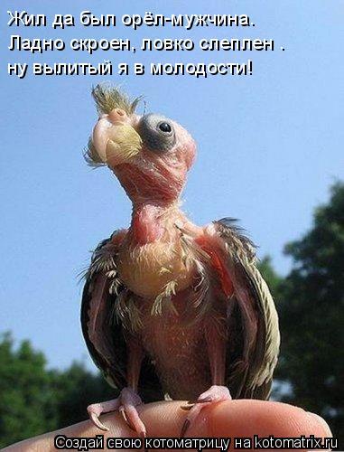 Котоматрица: Жил да был орёл-мужчина.  Ладно скроен, ловко слеплен —  ну вылитый я в молодости!