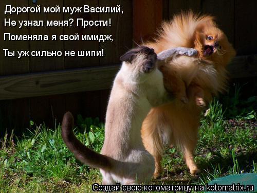 Котоматрица: Дорогой мой муж Василий, Не узнал меня? Прости! Поменяла я свой имидж, Ты уж сильно не шипи!