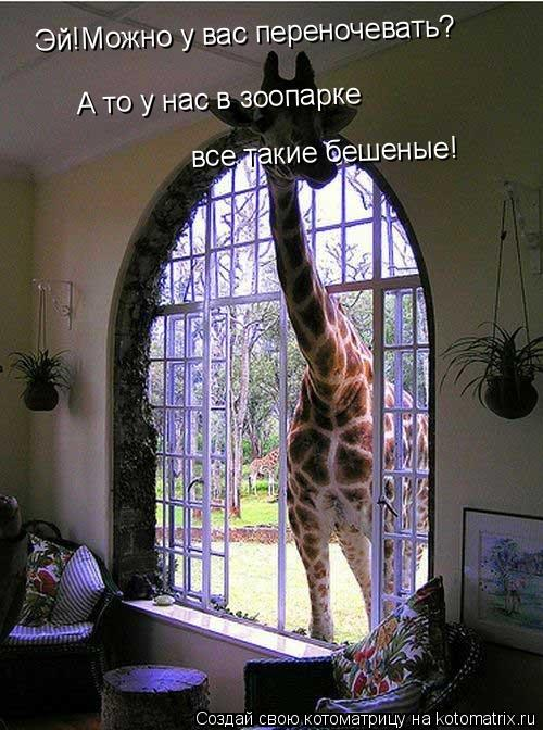 Котоматрица: Эй!Можно у вас переночевать? А то у нас в зоопарке  все такие бешеные!