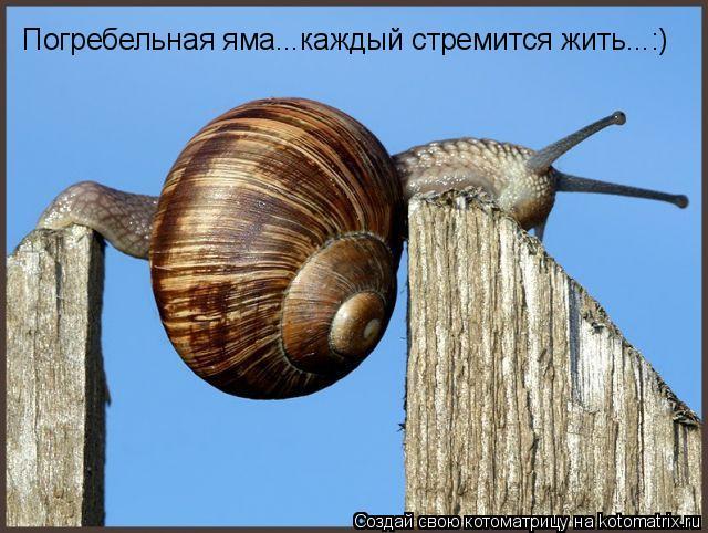 Котоматрица: Погребельная яма...каждый стремится жить...:)