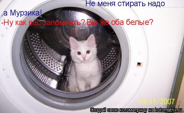 Котоматрица: Хозяйка!Ты ошиблась! Не меня стирать надо ,а Мурзика! -Ну как вас запомнить? Вы же оба белые?