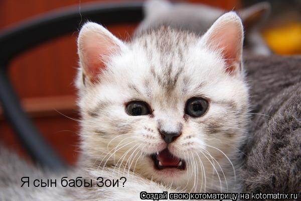 Котоматрица: Я сын бабы Зои?