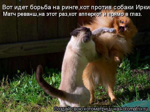 Котоматрица: Вот идет борьба на ринге,кот против собаки Ирки. Матч реванш,на этот раз,кот апперкот и прямо в глаз.