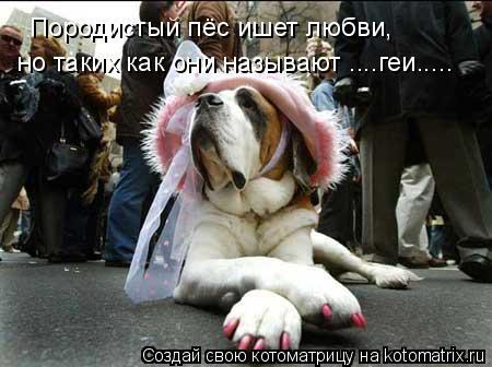 Котоматрица: Породистый пёс ишет любви, но таких как они называют ....геи.....