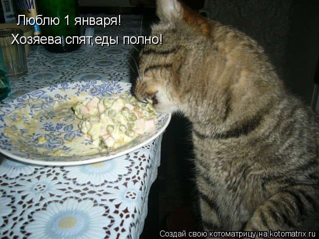 Котоматрица: Люблю 1 января! Хозяева спят,еды полно!