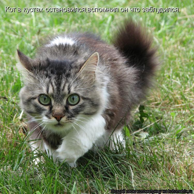 Котоматрица: Кот в кустах остановился,вспомнил он что заблудился.