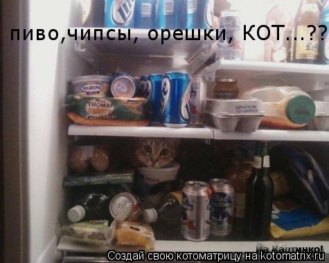 Котоматрица: пиво,чипсы, орешки, КОТ...???