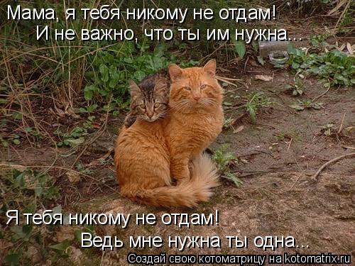 Котоматрица: Мама, я тебя никому не отдам! И не важно, что ты им нужна... Я тебя никому не отдам! Ведь мне нужна ты одна...